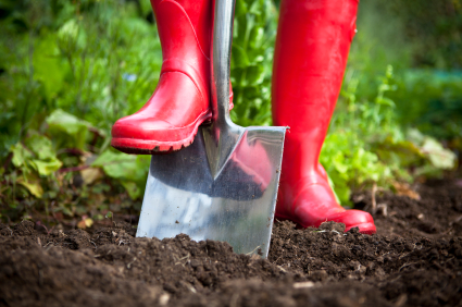Red Boots in Garden with Shovel in Soil_Stock Image
